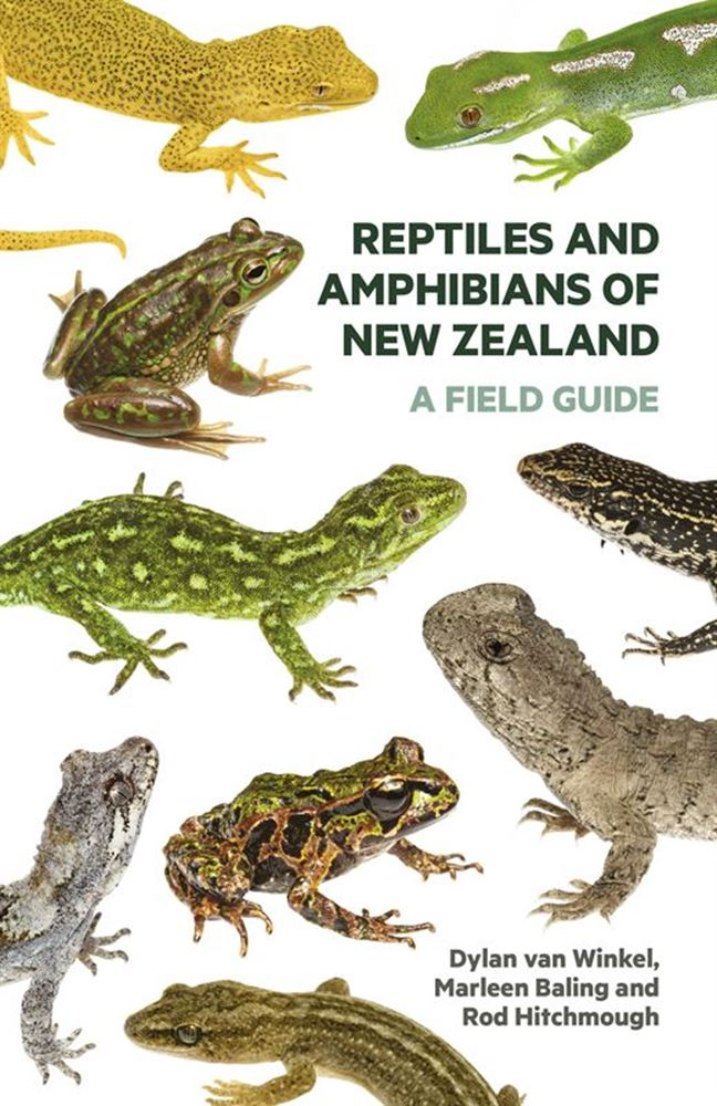 Shining the spotlight on New Zealand's reptiles